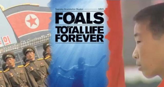 foals1